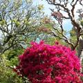写真: 花まつり03