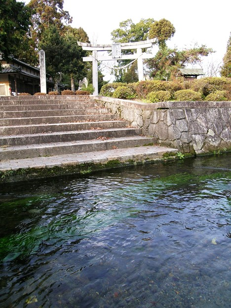 針江の生水04