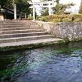 写真: 針江の生水04