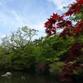 放生池:新緑の永観堂22