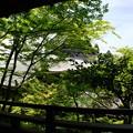 臥龍廊からの眺望:緑の永観堂15
