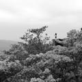 写真: 天空のツツジ大和葛城山27