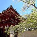 写真: 岡寺山門