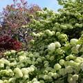 写真: 花まつり02
