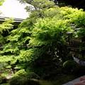 Photos: 愛でる:新緑の永観堂13