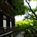 写真: 新緑の永観堂12