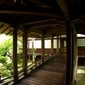新緑の永観堂05