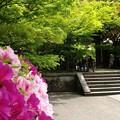 写真: 新緑の永観堂01