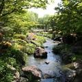 写真: 瀬音涼し:石津渓05