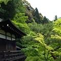 写真: 森閑:新緑の永観堂19