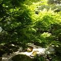 写真: 木漏れ日:新緑の永観堂06