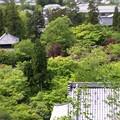 写真: 俯瞰図:新緑の永観堂18
