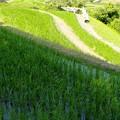写真: 日射し:棚田15