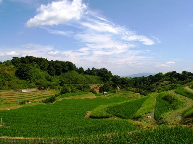写真: 緑と青:棚田05