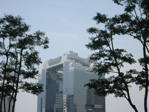 写真: 樹木に包まれて:都会オアシス16