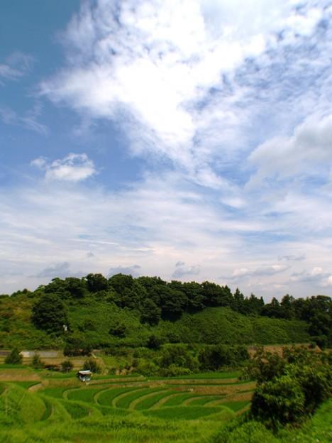 白い雲に包まれて:棚田13