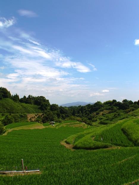 緑の絨毯:棚田03
