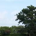 写真: 本薬師寺跡:ホテイアオイ11