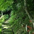 写真: 緑陰に包まれて:曼珠沙華40