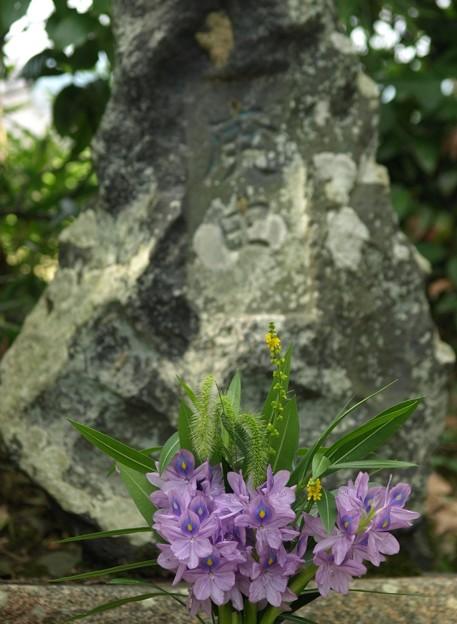 写真: 本薬師寺跡:ホテイアオイ04