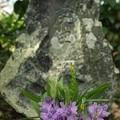 本薬師寺跡:ホテイアオイ04