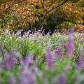 秋の訪れ:彩りライン02