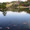 写真: こい池:晩秋万博公園15