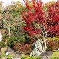 Photos: 鷺もうっとり:晩秋万博公園18