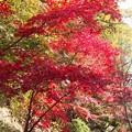 お散歩中です♪:杉村公園晩秋04