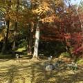 写真: 杉村公園晩秋03