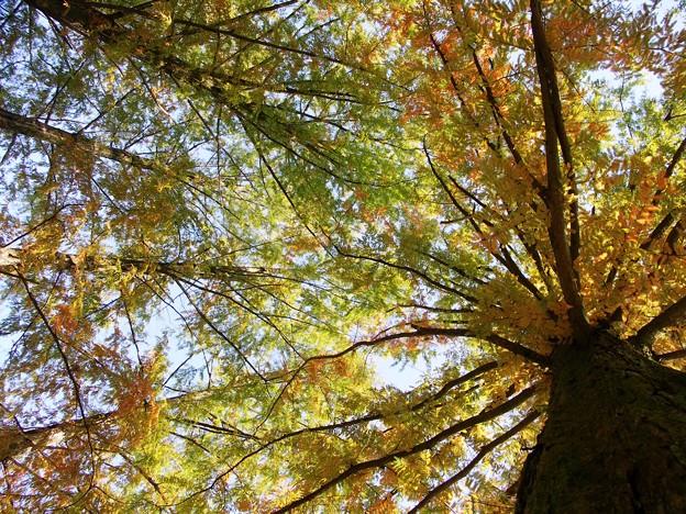 写真: 見上げれば...w(゜o゜)w:杉村公園晩秋02