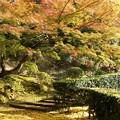 Photos: 杉村公園晩秋01