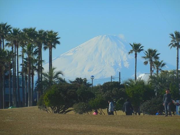 巨大な富士~辻堂海浜公園