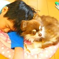 Photos: 妹犬^^
