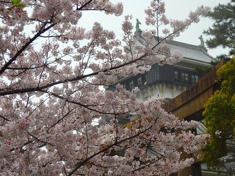 小倉城の桜