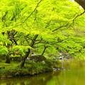 日比谷公園~緑