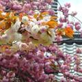 写真: 興福寺