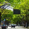 写真: 初夏の日本大通り