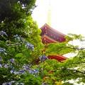 写真: 紫陽花~高幡不動