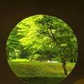 写真: 鎌倉 明月院
