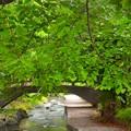 宿河原~新緑