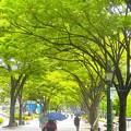 大阪市役所の欅並木^^