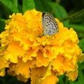 写真: くりはま花の国