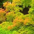 写真: 徳川庭園にて^^