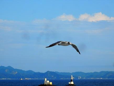 カモメ~東京湾フェリー