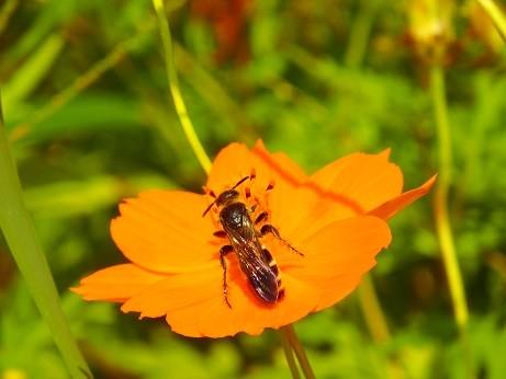 岡野公園~花に蜂