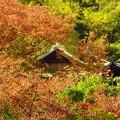 写真: 紅葉~三宮