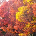 名城公園~紅葉