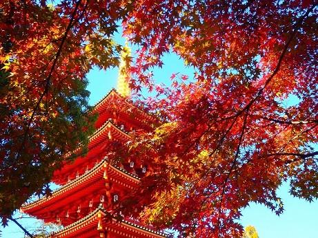 写真: 高幡不動~紅葉