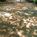初夏の木漏れ日・・?